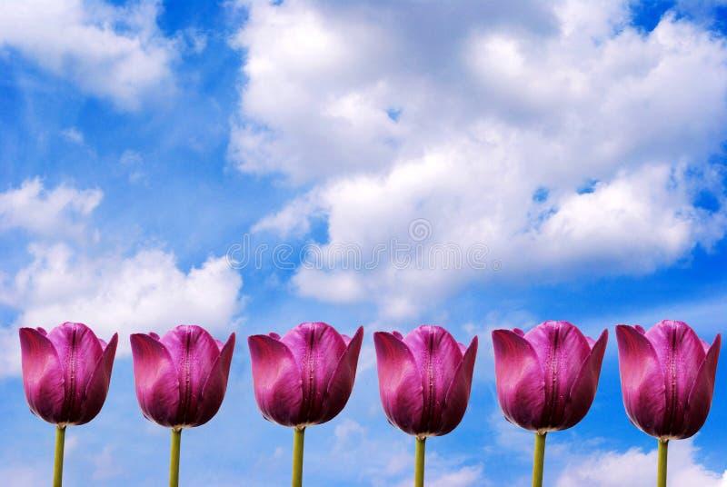 Flowerses op achtergrondhemel. stock afbeelding