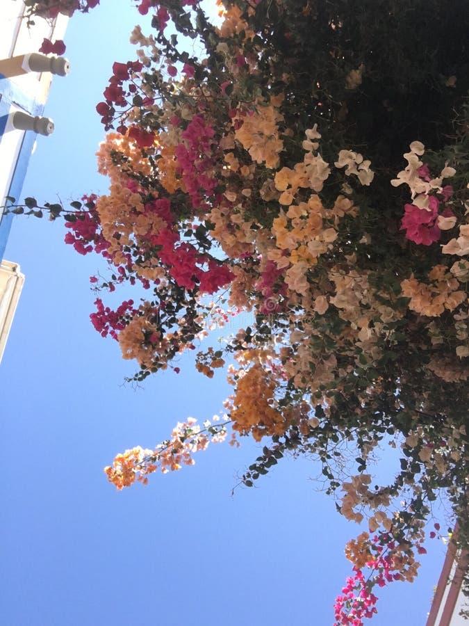 Flower sky stock photography