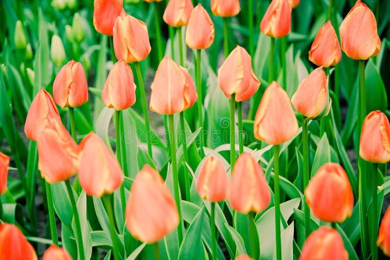 Flowerss au milieu de ressort image stock