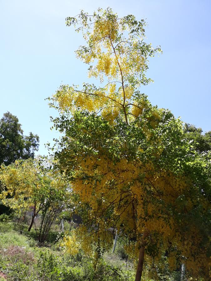 Flowerstree fotografia stock