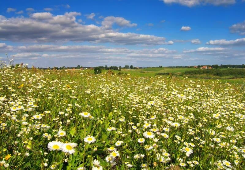 flowery λιβάδι στοκ εικόνες με δικαίωμα ελεύθερης χρήσης