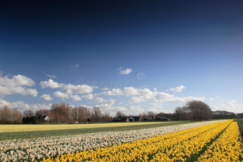 Flowery landscape royalty free stock images