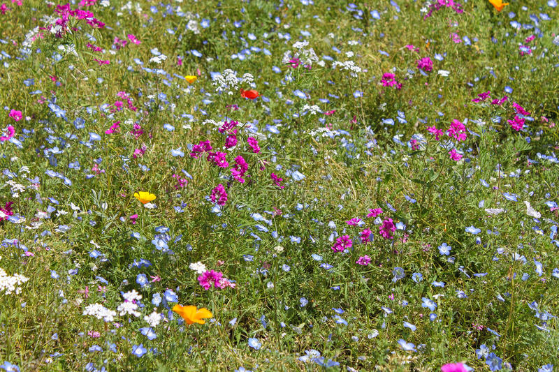 Flowery meadow. A spring colorful flowery meadow stock image