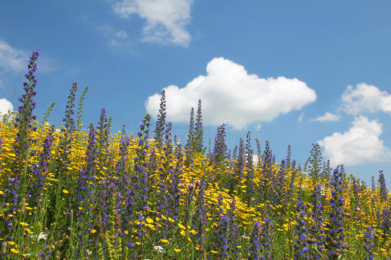 Flowery meadow of wildflowers against blue sky with cloud royalty free stock photography