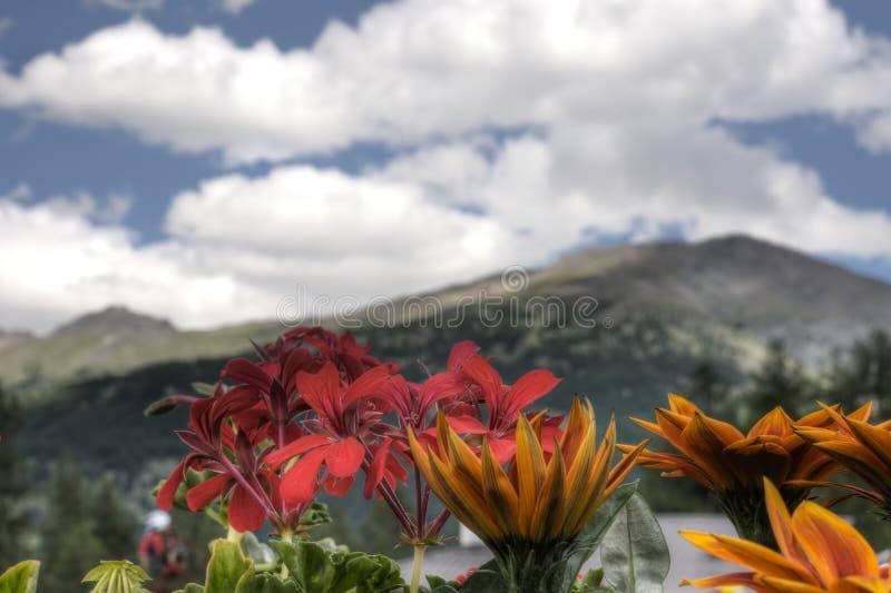 Flowes alpinos fotos de stock royalty free