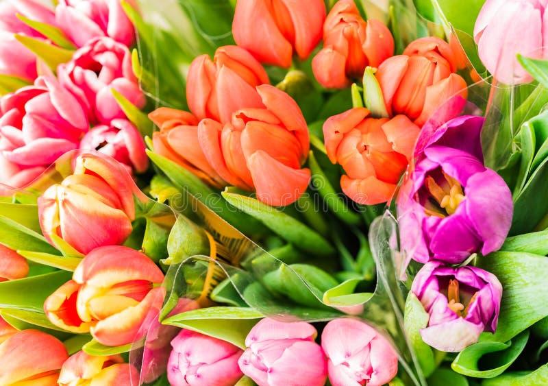 Flowes bonitos da mola, grupos coloridos das tulipas, close-up fotos de stock