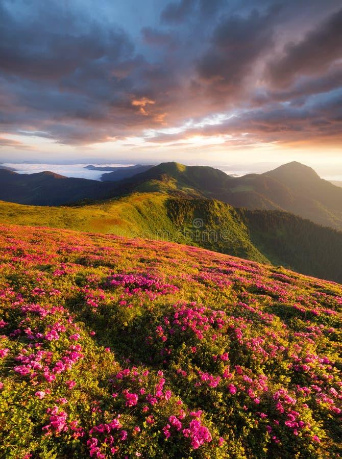 Flowes in de bergen tijdens zonsopgang stock foto