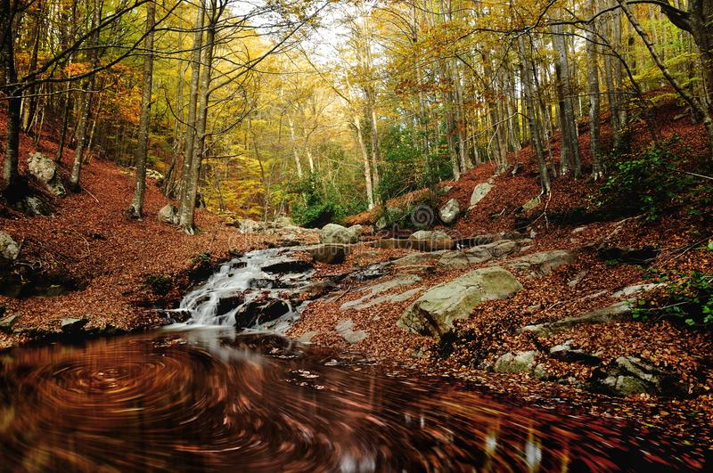 Flowing autumn Montseny steam stock photos