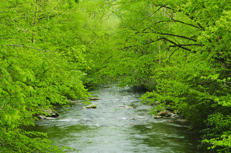 Download Flowing Creek Stock Photography - Image: 9912352