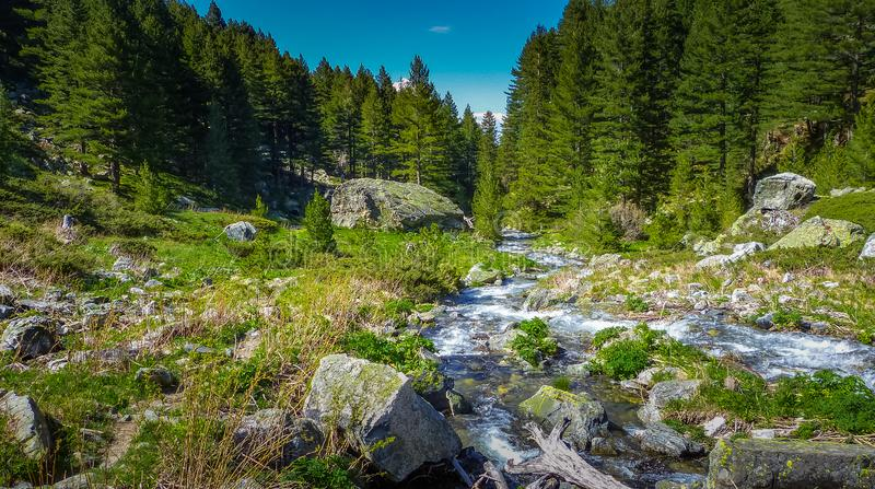 Flowing creek, rocky valley, evergreen trees stock image