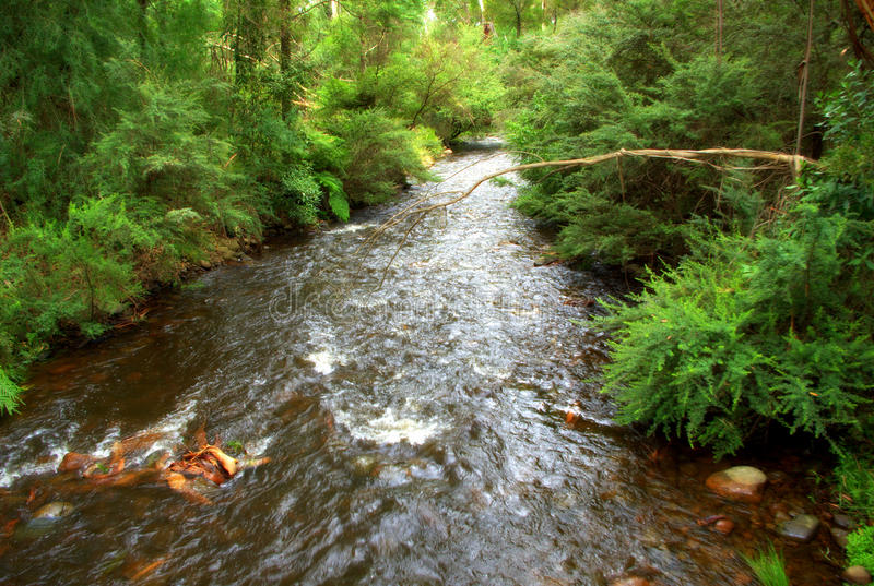 Flowing river. A peaceful flowing river surrounded by lush bush stock photography