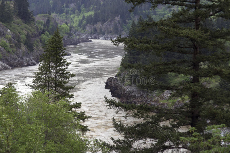 Download Flowing river canyon stock image. Image of evergreen - 42891937