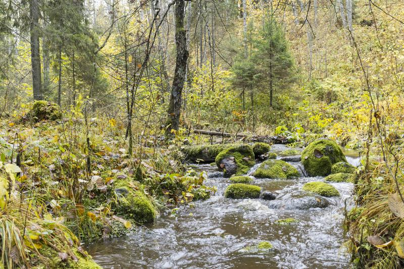 Flowing stream creek in forest in autumn stock image