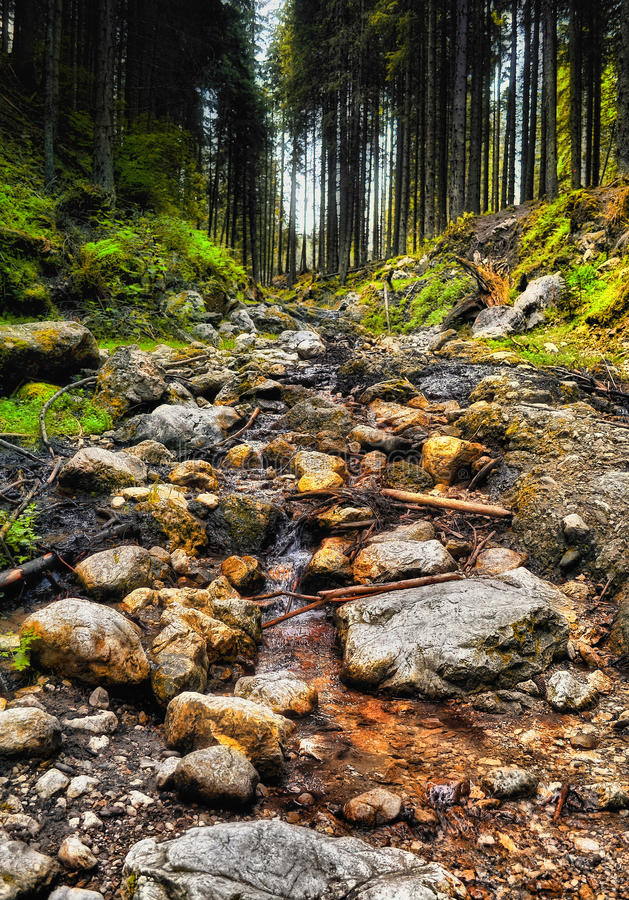 Flowing stream in the forest stock photos