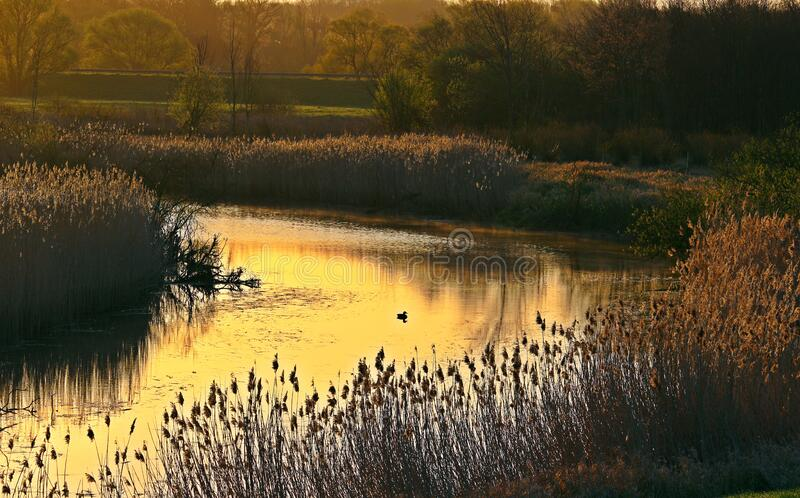 Flowing Water in a Riverside Near Brown Grass stock image