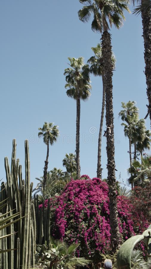 Flows and Palm Trees royalty free stock photography