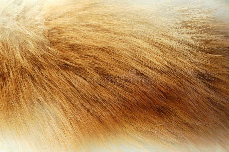 Flox fur stock photography