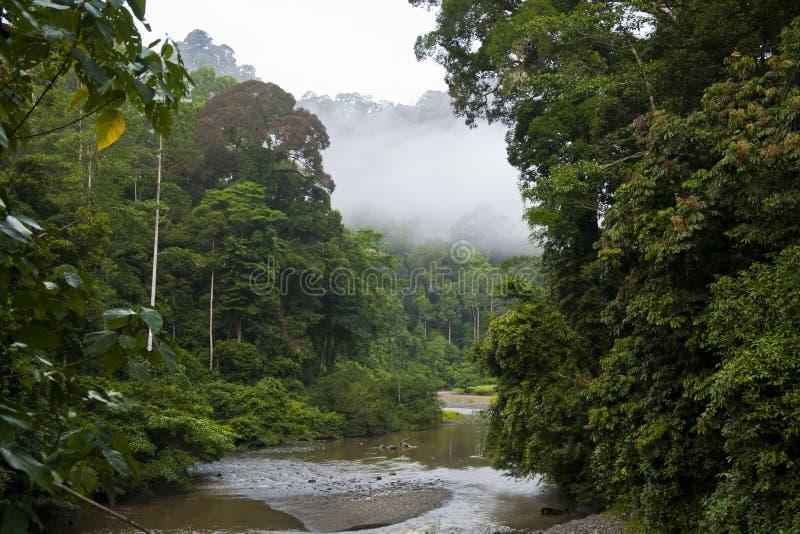 Flua a floresta da chuva e da nuvem do through, Bornéu foto de stock