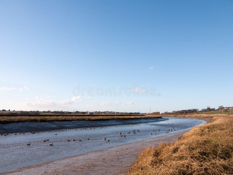 flua o estuário de essex da costa da água azul de opinião da paisagem do rio com fotos de stock