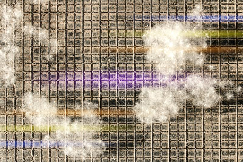 Fluff do álamo como as mentiras brancas do algodão nas partes em uma superfície quadriculado preta, com as listras coloridas da l imagem de stock royalty free