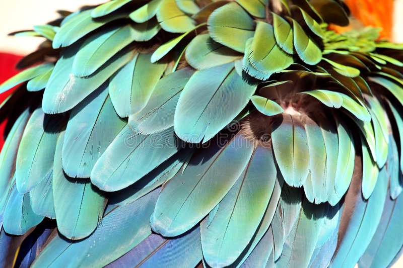 Fluffed up feathers stock photos