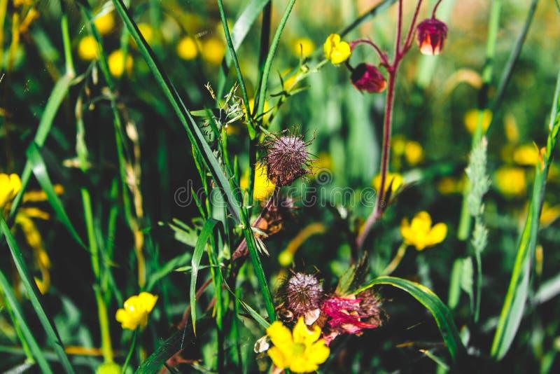 fluffig blomma arkivbild