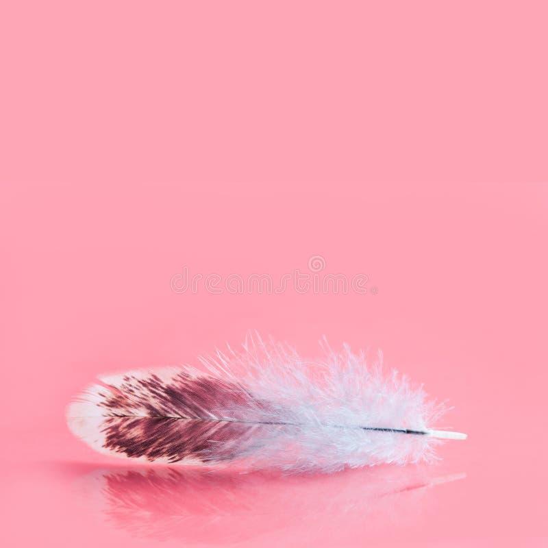 Fluffig färgrik fjäder på rosa bakgrund Härlig fluffig fågelfjäderdräktmodell Selektivt grunt djup av fältet arkivfoto
