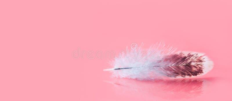 Fluffig färgrik fjäder på rosa bakgrund Härlig fluffig fågelfjäderdräktmodell Selektivt grunt djup av fältet royaltyfri bild