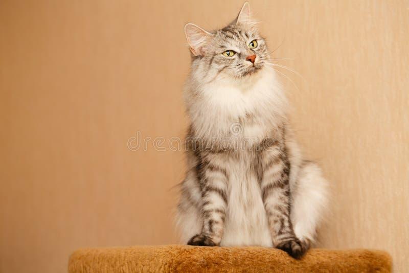 fluffig katt royaltyfria bilder