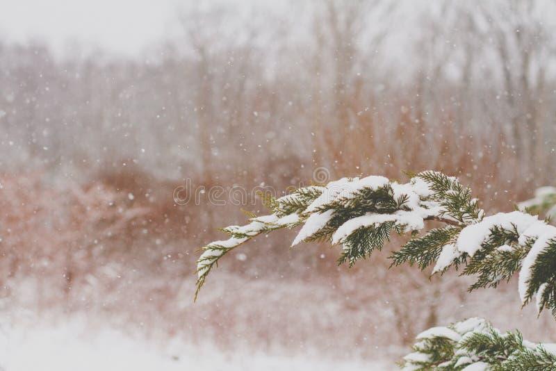 Fluffig snö dammar av trädfilialerna royaltyfri foto
