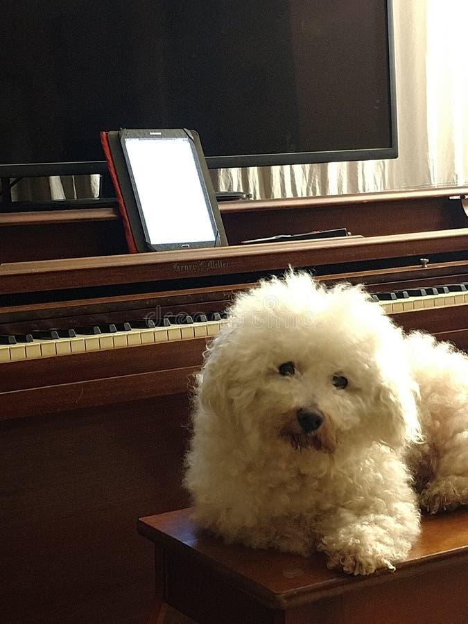 fluffig white för hund royaltyfri fotografi