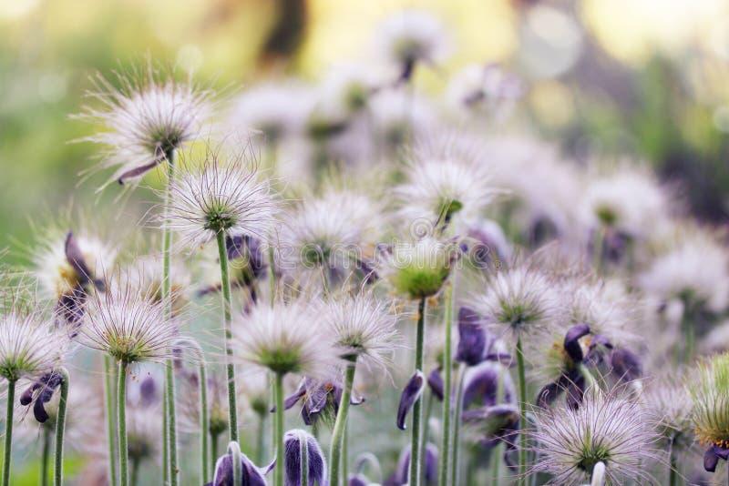 Fluffiga blommor royaltyfri fotografi