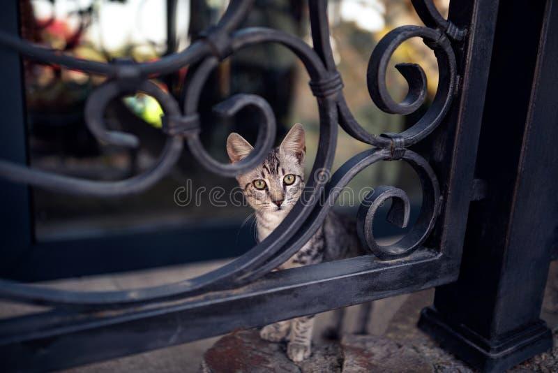 Fluffiga stag för strimmig kattkatt på staketet arkivbilder