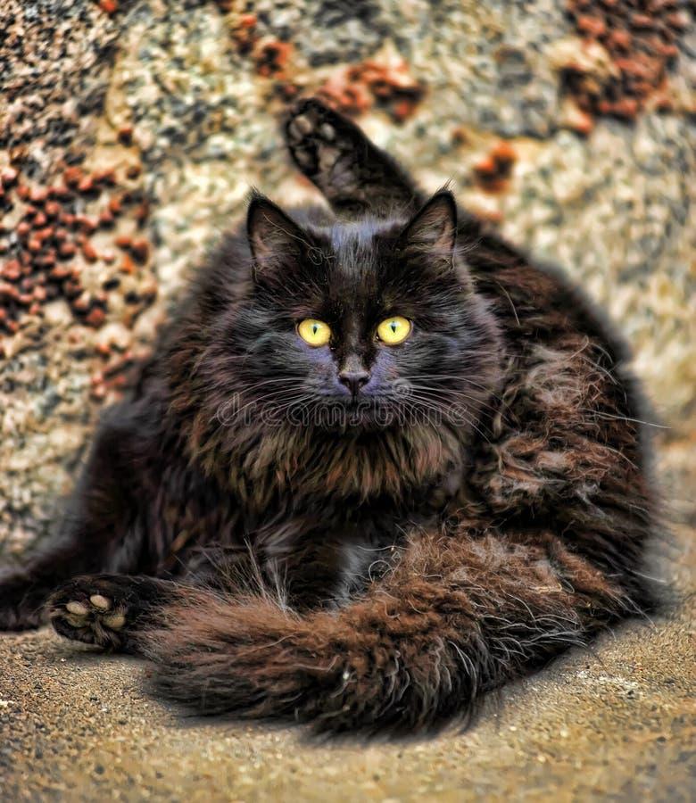 Fluffiga washes för svart katt royaltyfri foto