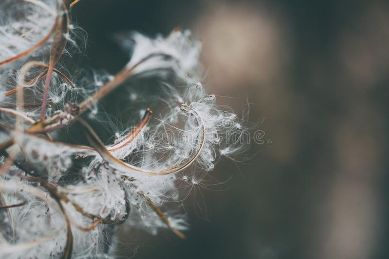 Fluffy Autumnal Branch Close Up. Autumnal fluffy branch in close up view against blurred background royalty free stock photography