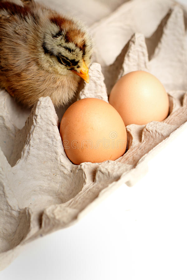 Download Hatched Baby stock image. Image of food, animal, agriculture - 29857831