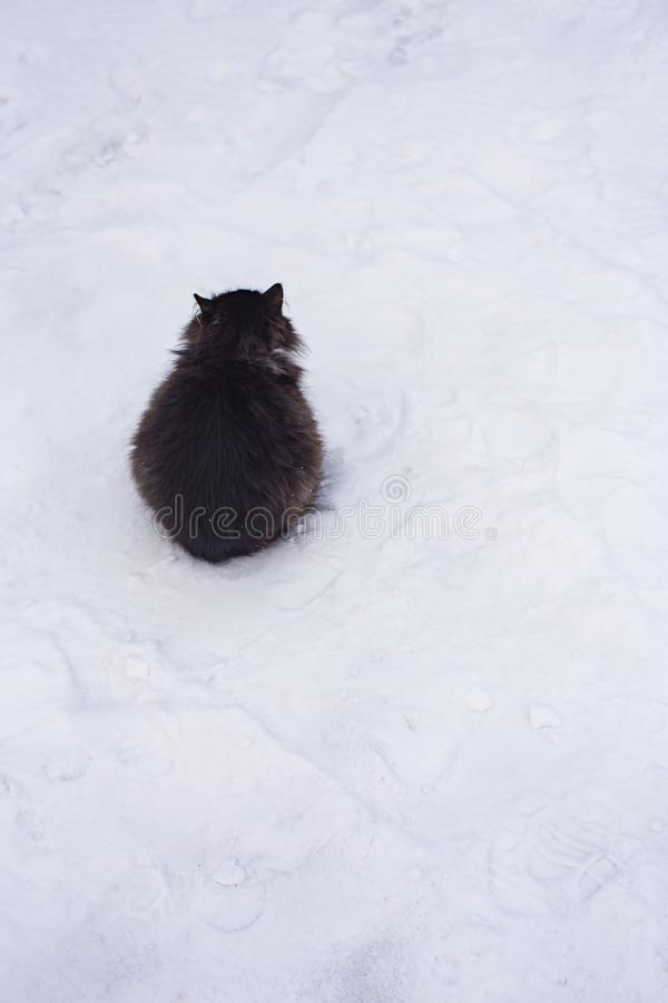 Fluffy black cat sits on white snow cowering from the cold, as if a dark lump on a light background royalty free stock image