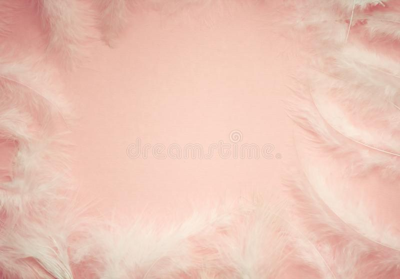 Fluffy blossom pink feather fashion design background - Happy Valentine fuzzy textured royalty free stock images