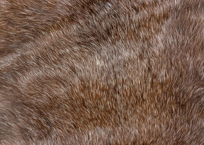 Fluffy brown natural animal fur texture background closeup.  royalty free stock photo