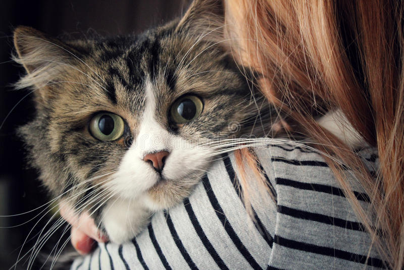 Fluffy cat royalty free stock photos