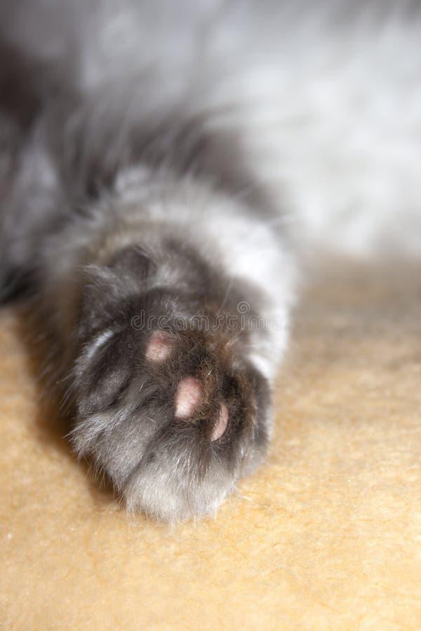 Fluffy cat`s paw. Domestic animal stock photo