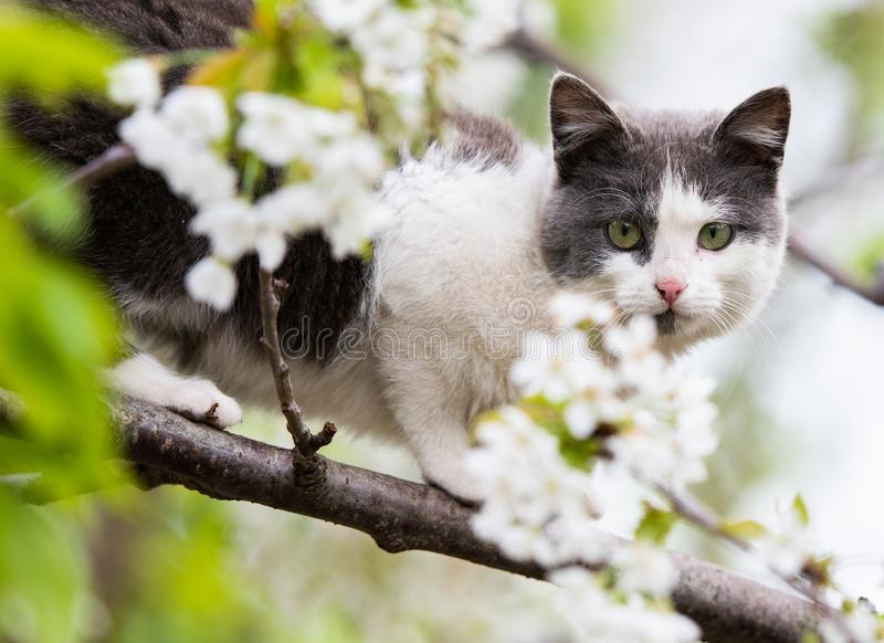 Fluffy cute cat sitting on a tree royalty free stock images