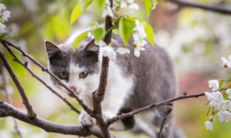 Fluffy cute cat sitting on a tree royalty free stock image