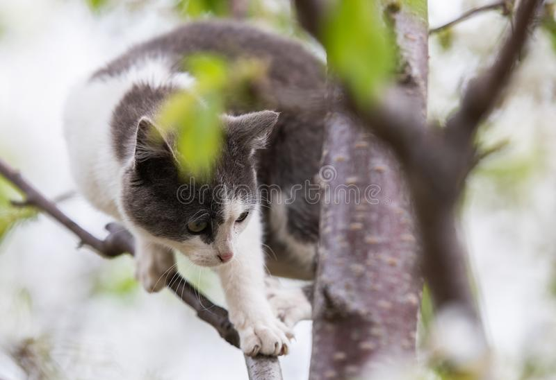 Fluffy cute cat sitting on a tree stock photography