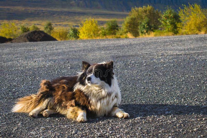 Fluffy dog relaxing in the sun stock photo