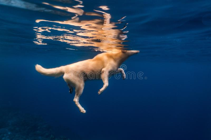 Fluffy dog swimming in the open sea stock images