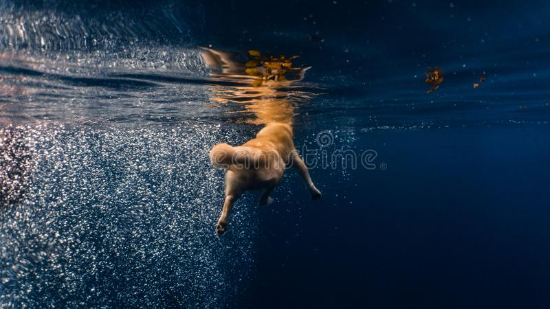 Fluffy dog swimming in the open sea stock image