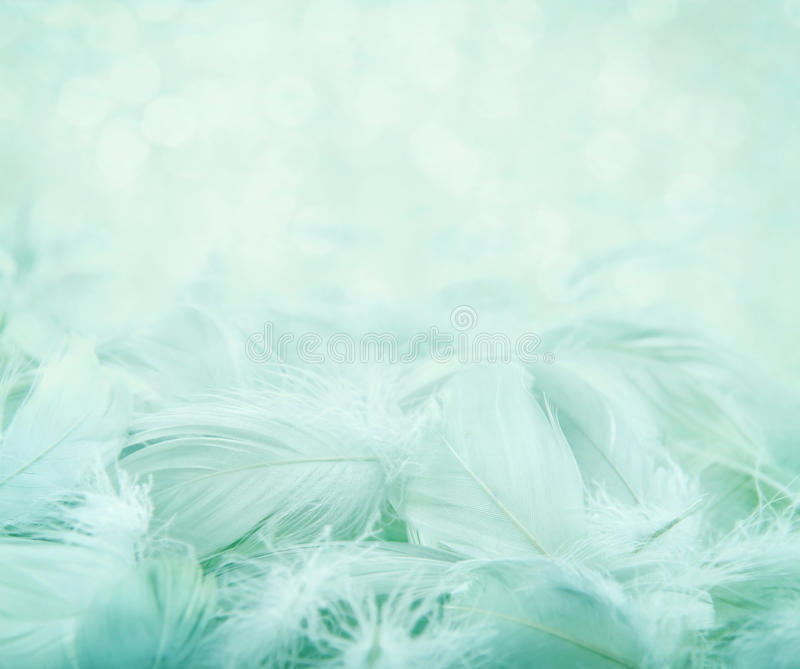 Fluffy feathers on turquoise blurry background. Soft fluffy feathers on turquoise blue blurry background and bokeh, day dreaming concept stock photos
