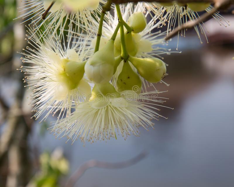 Fluffy flower. The spring bloom royalty free stock photo