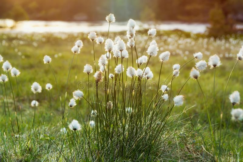Fluffy flowers background royalty free stock photos